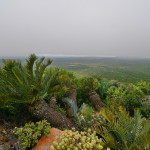 n_karoo_cycad_lodge_background